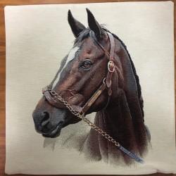 Brun häst BRUN