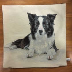 Border Collie SVART